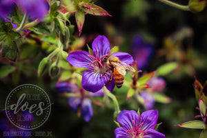 Bee on Purple Flower - High-Res Digital Photograph