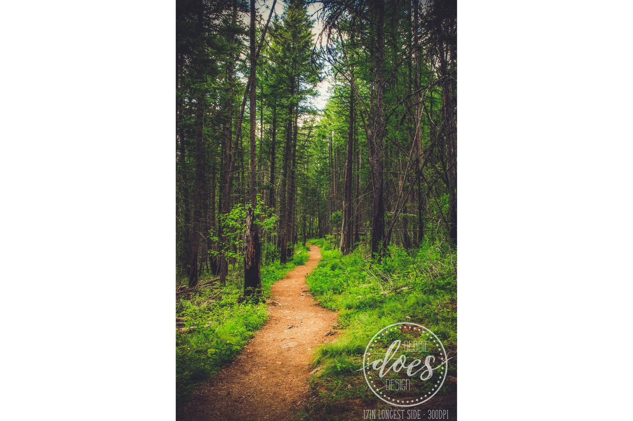 Forest Path - High Res Digital Photograph