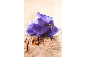 Purple Flower on Wood - High Res Digital Photograph