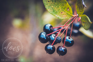 Wild Dark Berries - High Res Digital Photograph