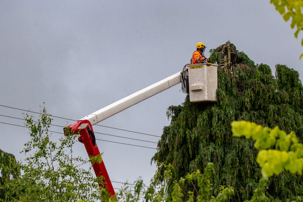 Tree Work Safety
