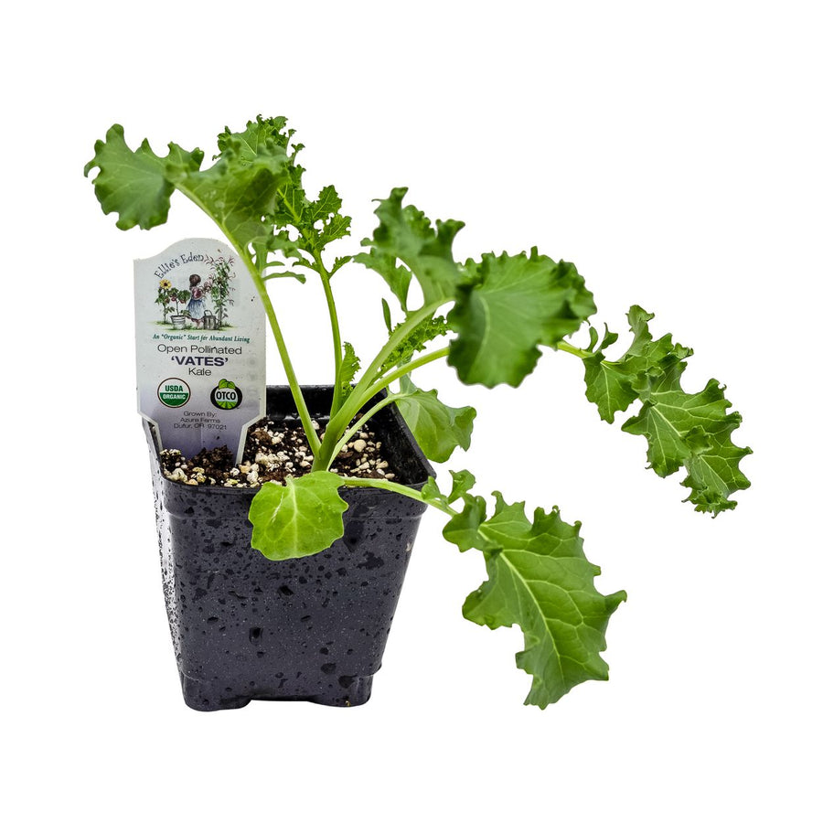 Organic Vates Curley Kale