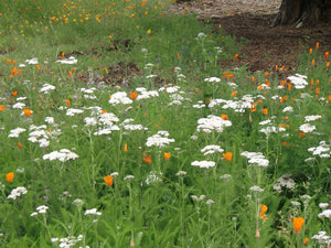California Native Wildflower Mixture Seed Bomb