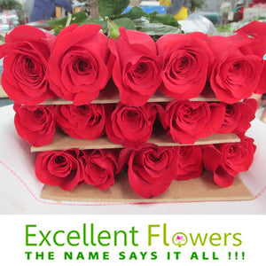 Ecuadorian Roses Exportation – The best quality of roses in the world