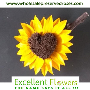 5 Interestings Facts About Sunflowers