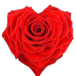 Heart Shape Jumbo Preserved Rose