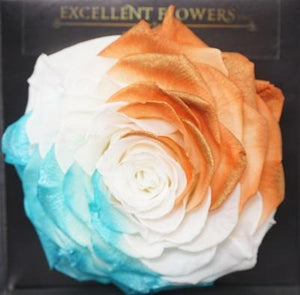 Tricolor Jumbo Preserved Roses