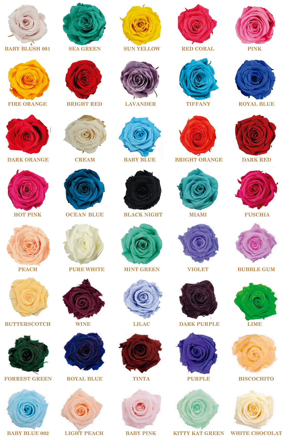 catalogue preserved roses wholesale