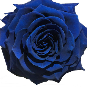 Royal Blue jumbo rose