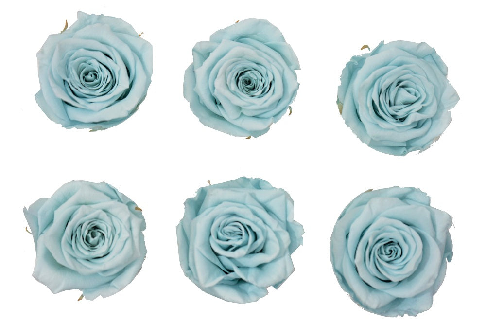 Medium: Baby Blue Preserved Rose * Box of 6 Preserved Rose Heads