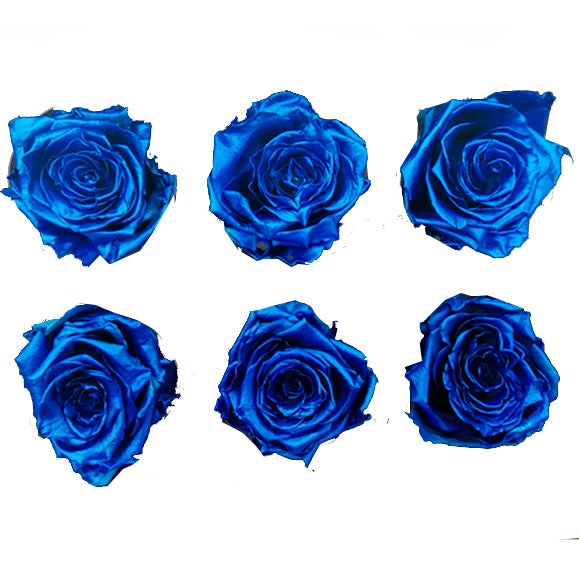 Large: Blue Metallic  Preserved Rose * Box of 6 Preserved Rose Heads