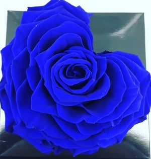 Heart rose: Royal Blue Heart Shape Jumbo