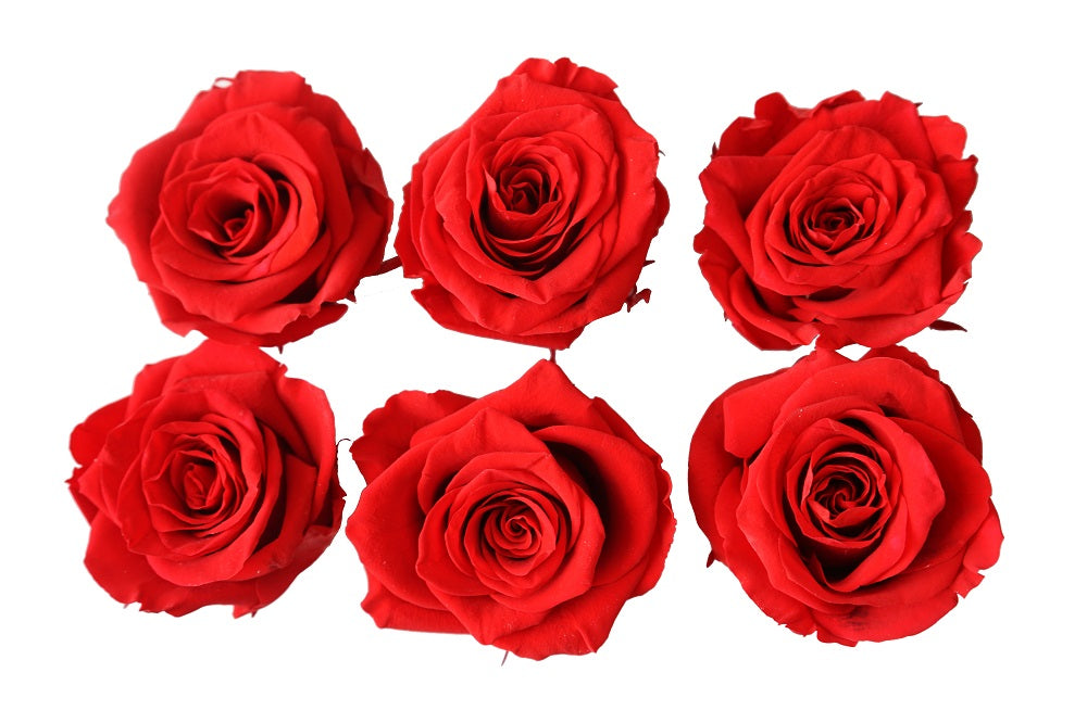 Medium: Bright Red Preserved Rose * Box of 6 Preserved Rose Heads