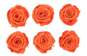 Medium: Bright Orange * Box of 6 Preserved Rose Heads