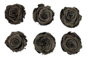 Large: Chocolate Preserved Rose  *Box of 6 Preserved Rose Heads