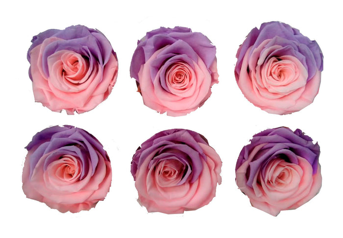 Medium: Candy Cotton Preserved Rose * Box of 6 Preserved Rose Heads