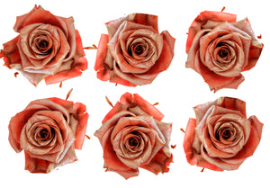 Large: Coral Pearl  Preserved Rose *Box of 6 Preserved Rose Heads