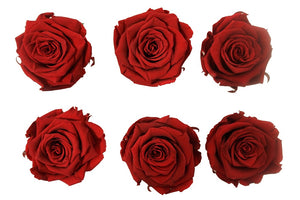 Medium: Dark Red Preserved  Rose * Box of 6 Preserved Rose Heads