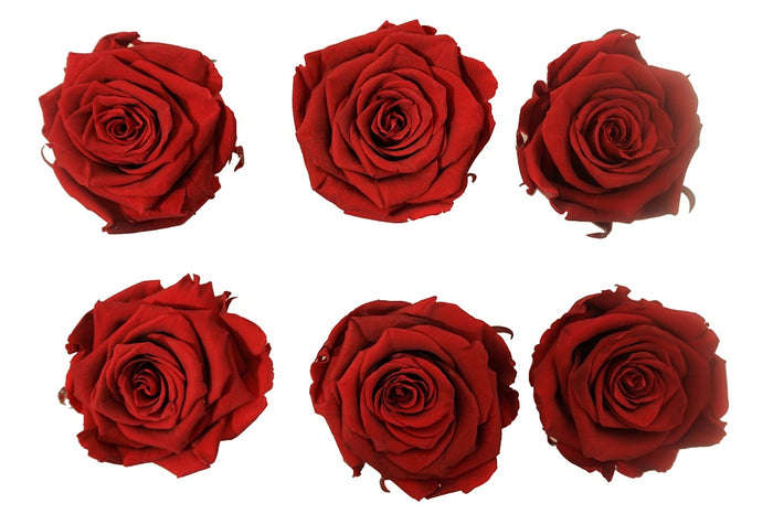 Large: Dark Red Preserved  Rose   *Box of 6 Preserved Rose Heads