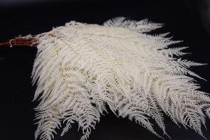 Stuff: Bleached white Ferns  LARGE I 30 bunches pack