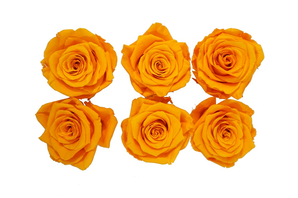 Medium: Fire Orange Preserved Rose * Box of 6 Preserved Rose Heads