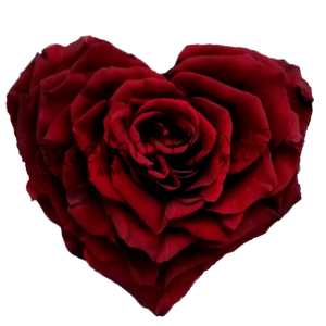 Heart rose: Dark Red  Heart shape preserved roses