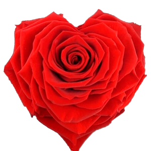 Heart rose: Bright Red Heart Shape Jumbo Preserved Rose