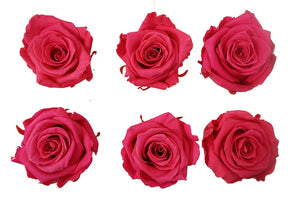 Medium: Hot Pink Novelty Preserved Rose * Box of 6 Preserved Rose Heads