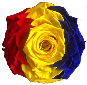 Jumbo rose: Tricolor Preserved Flag Rose