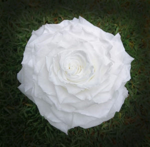 Jumbo rose: Pure White  Rose Jumbo