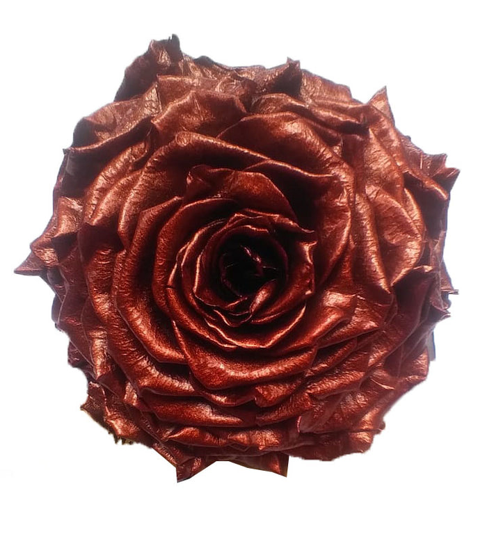 Jumbo rose: Metallic Bronze Jumbo Rose