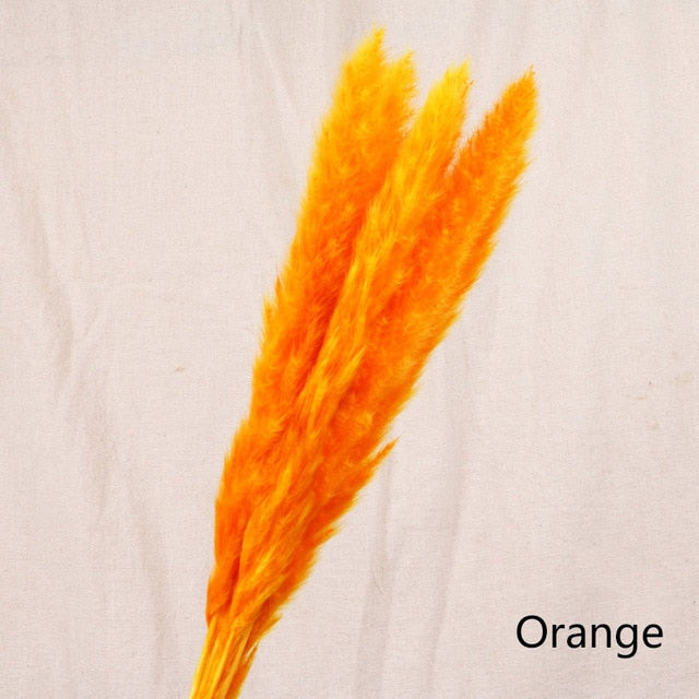 Pack of 5 - Orange Natural Preserved Pampa's Grass - $18.00