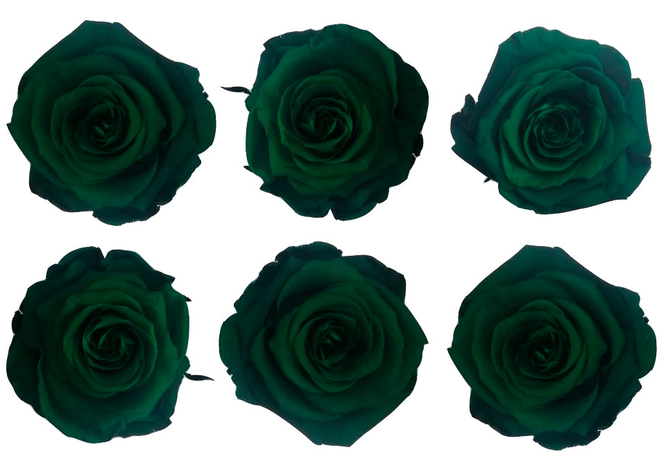 Large: Jade Green Preserved Rose  *Box of 6 Preserved Rose Heads