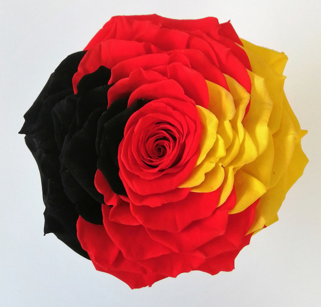 Jumbo rose: Tricolor 003 Preserved German Flag Rose