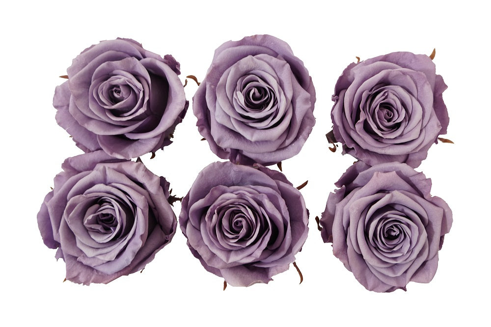 Medium:  Lavender Preserved Rose  * Box of 6 Preserved Rose Heads