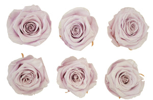 Large: Lilac  Baby Lavender Preserved   *Box of 6 Preserved Rose Heads