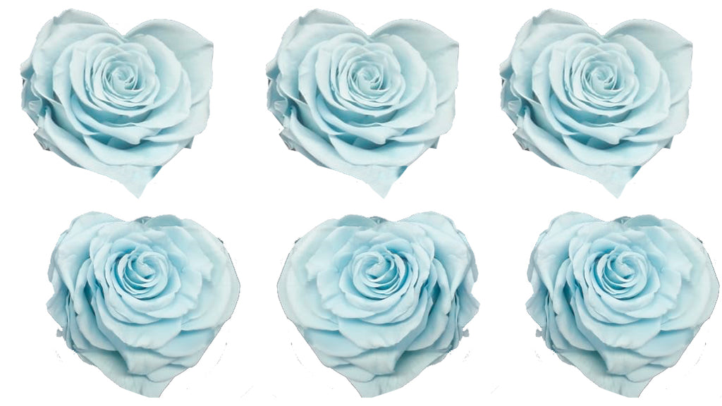 Large Heart: Baby Blue Heart Shape  Preserved Rose *Box of 6 Preserved Rose Heart Heads