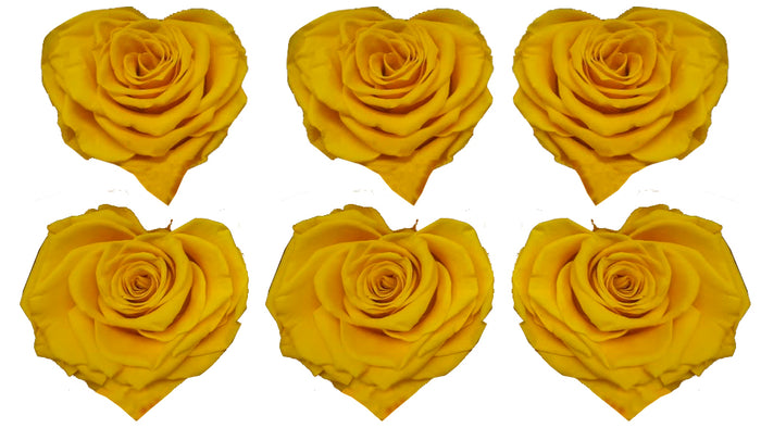 Large Heart: Sun Yellow Heart Shape  Preserved Rose *Box of 6 Preserved Rose Heart Heads