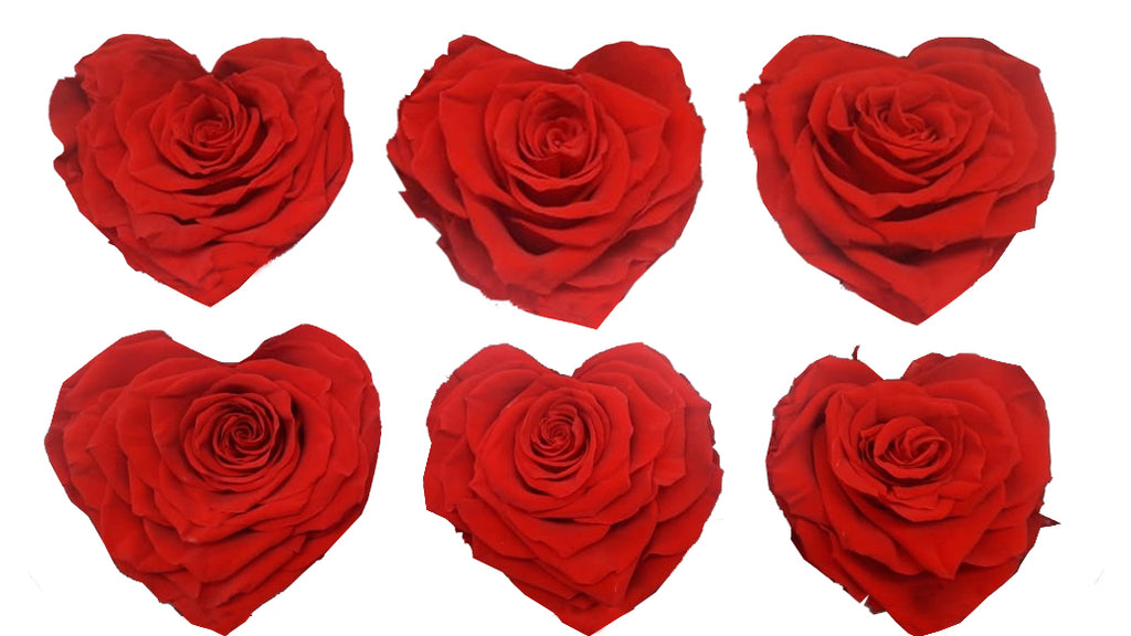 Large Heart: Bright Red Heart Shape  Preserved Rose *Box of 6 Preserved Rose Heart Heads