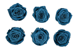 Medium: Marina Blue  Preserved Rose * Box of 6 Preserved Rose Heads