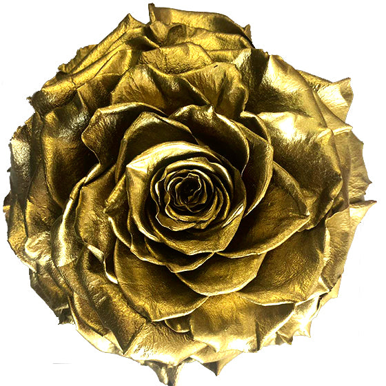 Jumbo rose: Metallic pearl Gold Jumbo Rose