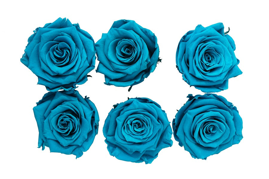 Medium: Ocean Blue Preserved Rose * Box of 6 Preserved Rose Heads