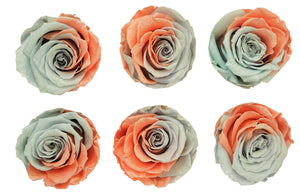 Medium: Pearl Lavender Coral Preserved roses * Box of 6 Preserved Rose Heads