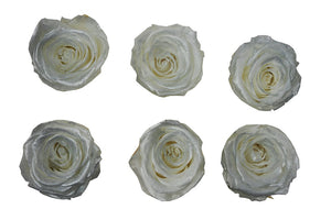 Large: Pearl White   Preserved Rose * Box of 6 Preserved Rose Heads