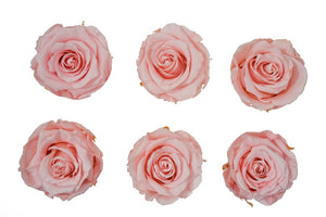 Large: Pink Coral  Preserved Rose * Box of 6 Preserved Rose Heads