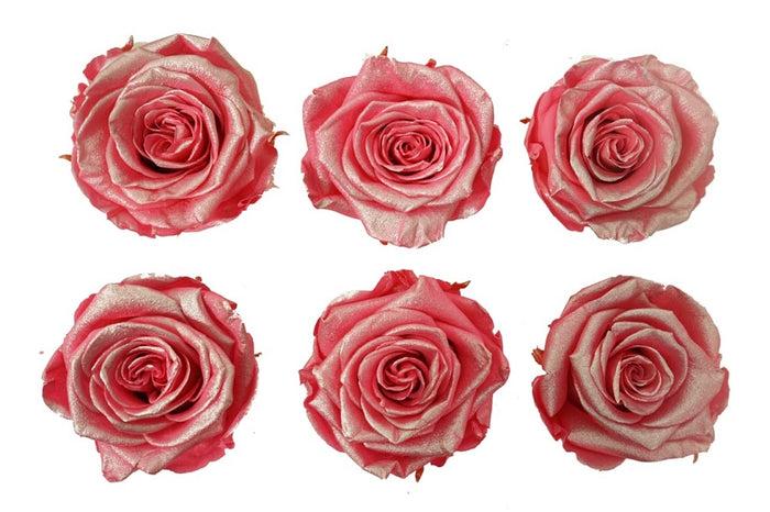 Medium: Pink Metallic  Preserved Rose * Box of 6 Preserved Rose Heads