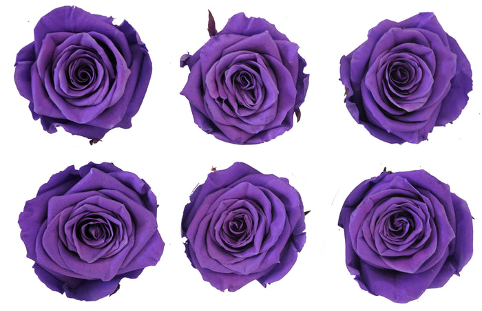 Medium: Purple preserved roses * Box of 6 Preserved Rose Heads