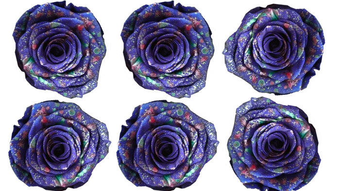 Large: Purple Confetti Preserved Rose *Box of 6 Preserved Rose Heads