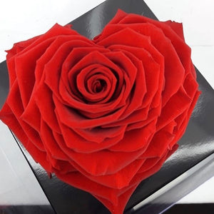 Preserved red heart rose
