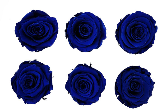 Medium: Royal Blue   Preserved Rose * Box of 6 Preserved Rose Heads